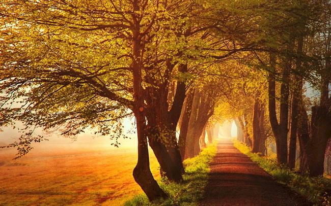 秋天乡村树林风景图片