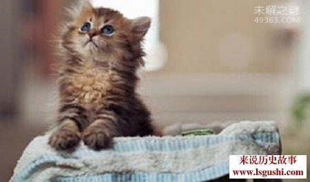 世界最小猫皮堡斯被发现,仅3个鸡蛋大小