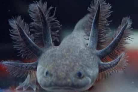 六角龙鱼色彩鲜艳,国际市场最受欢迎的宠物