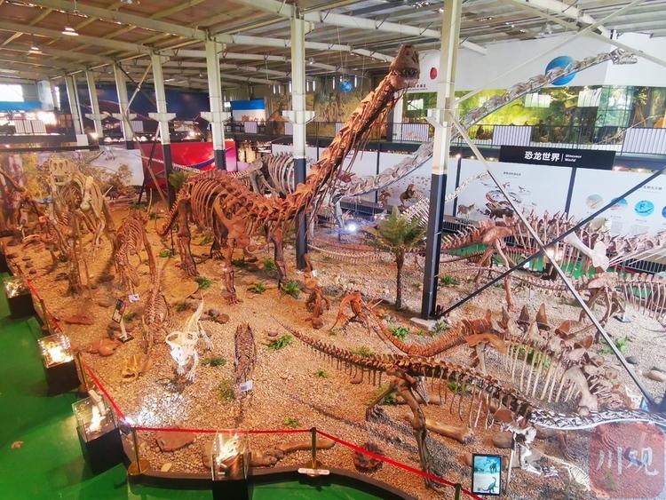(转载)世界之最!崇州这家博物馆里藏着一条身长近40米的化石恐龙